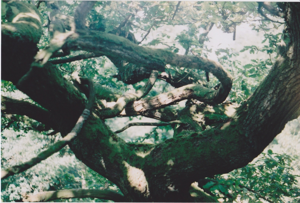 Sheffield Wood