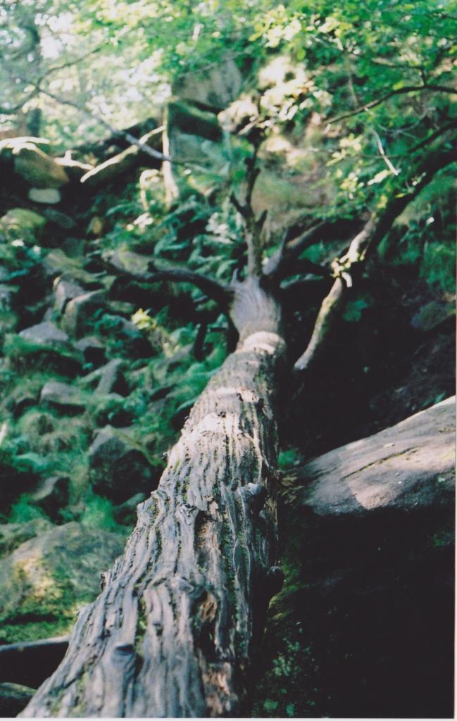 Padley Gorge Sheffield