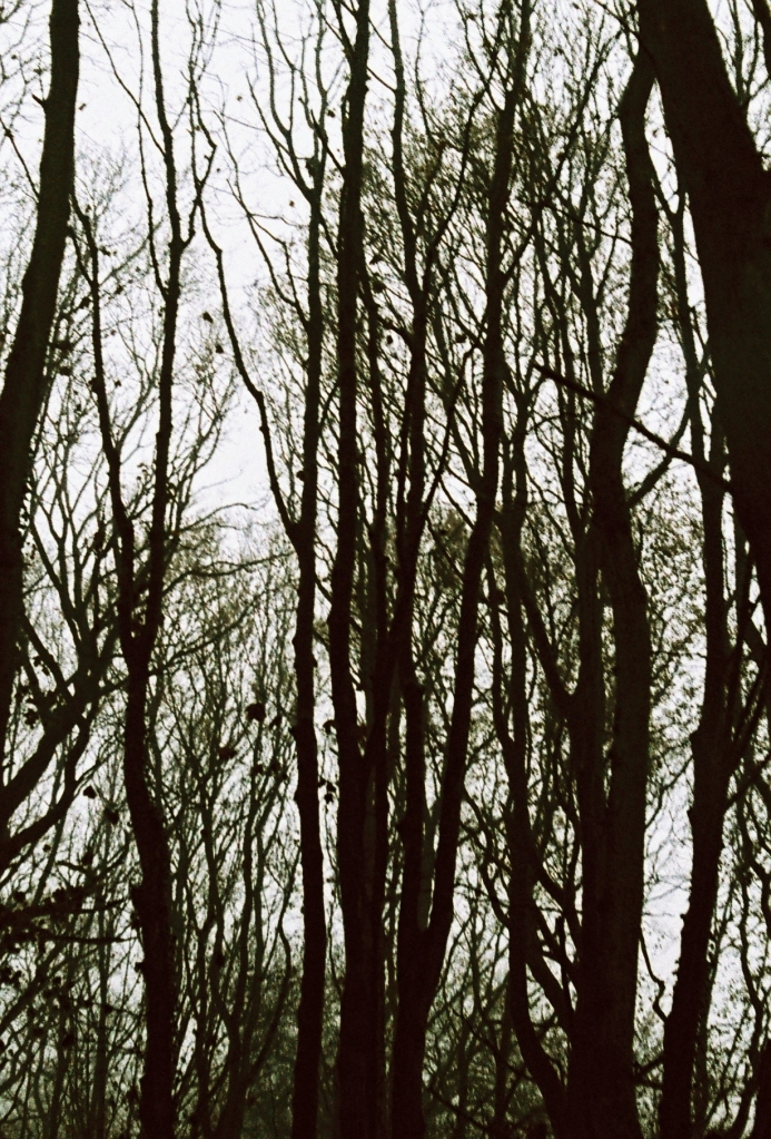 Silhouette trees